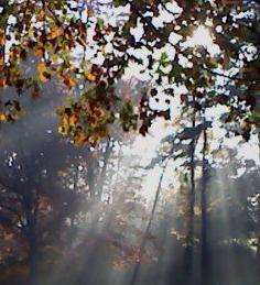 Sunlight thru trees-edited