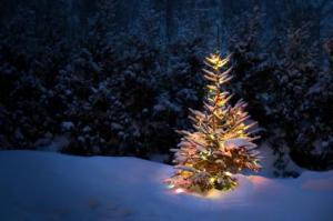 Christmas_Tree_Farms
