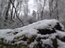 Snow 2J