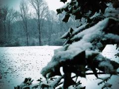 Snow 6J