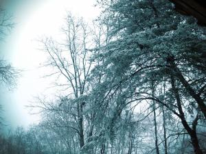 Snow 7J