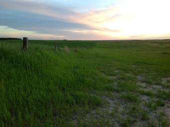 Landscape#1