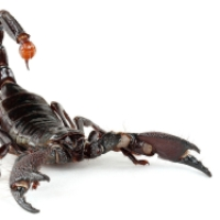 The Nature of Scorpions