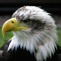 Lessons from an Eagle