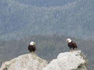 eagle_stare_down