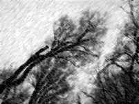 wintertree-charcoal